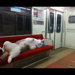 電車で眠る人