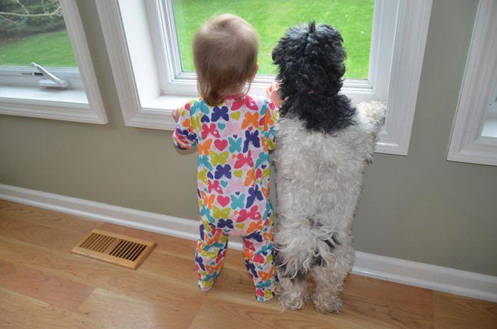 外を覗いている犬に気がついた子ども。次の瞬間…可愛すぎることに(笑)!