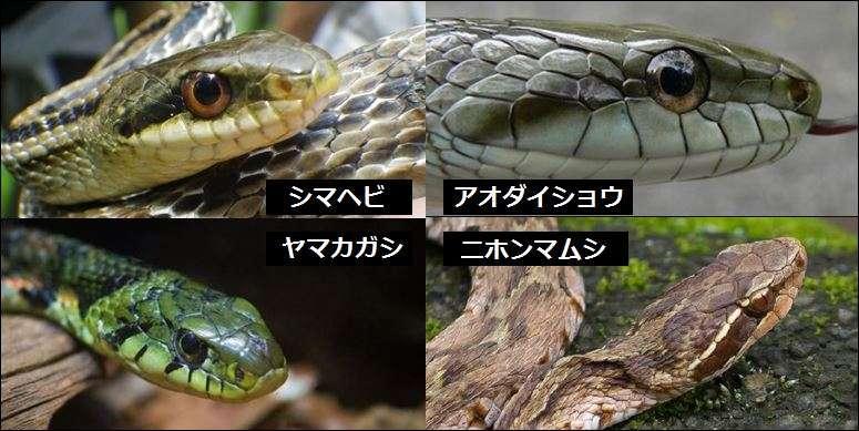 公園で毒ヘビに男児かまれ重体、兵庫・伊丹 ヤマカガシか