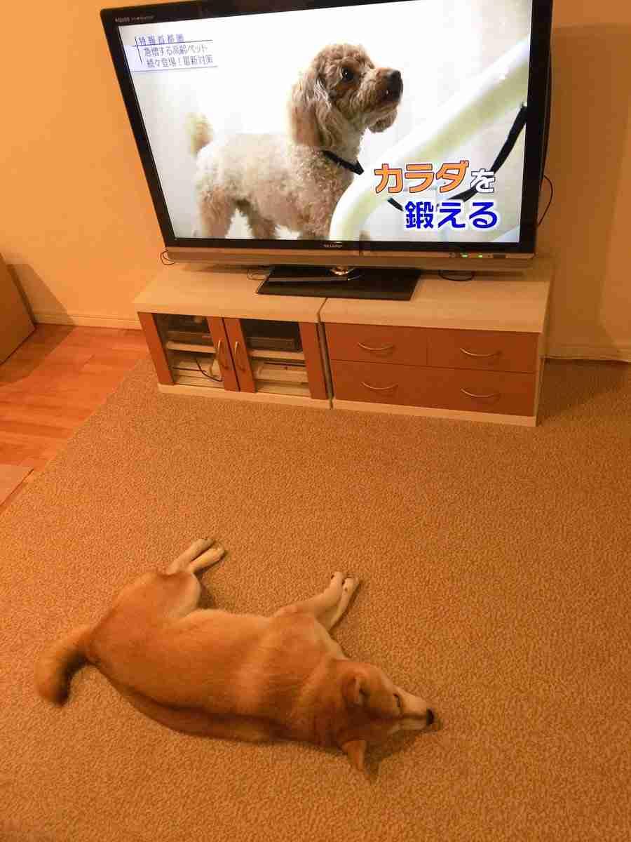 ガルちゃん犬カフェ☆4号店オープンしました