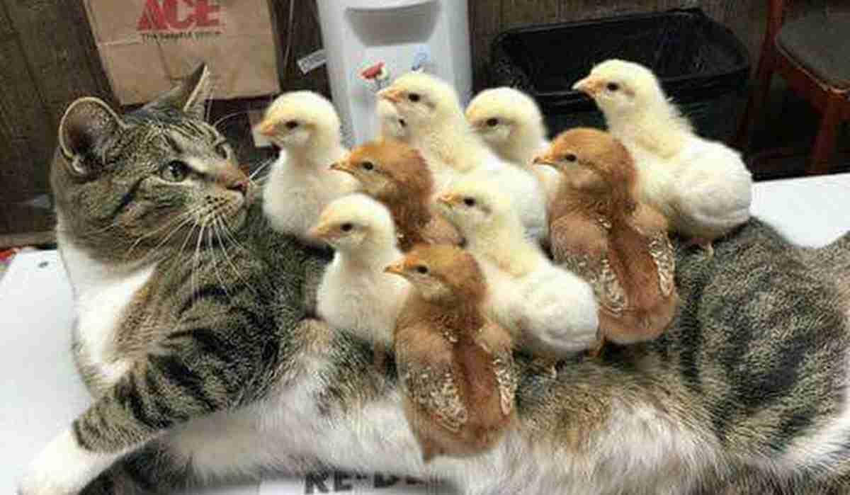 コントみたいw 猫パンチを浴びたオウムの対抗策にほっこり