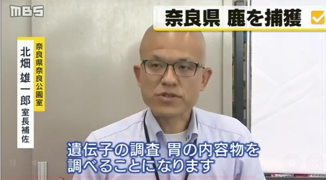 """天然記念物""""奈良のシカ"""" 1頭目を捕獲し殺処分"""