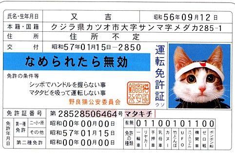にゃんとかわいい迷子札!愛猫のためのIDカード型迷子札「マイニャンバー迷子札」が登場