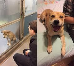 犬、猫の虐待