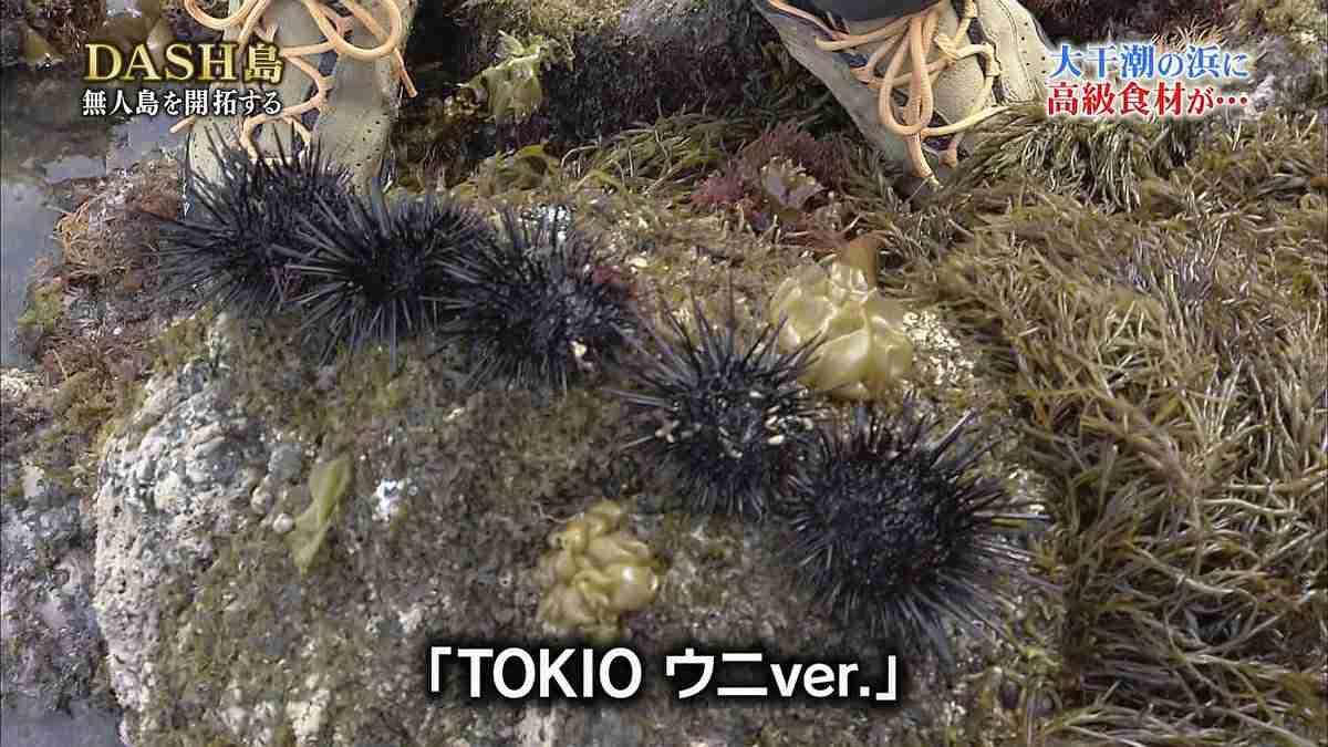 『鉄腕!DASH!!』城島茂、ブヨブヨのグロテスク生物を食し「食うのか」とネット驚愕