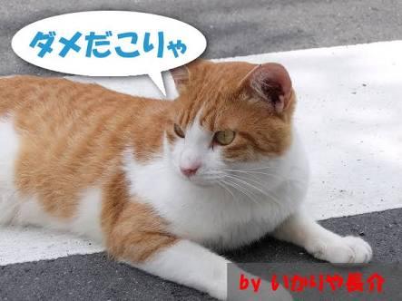 坂口杏里 六本木のラウンジを辞めるとツイート…今度は渋谷に勤務、キャバクラか