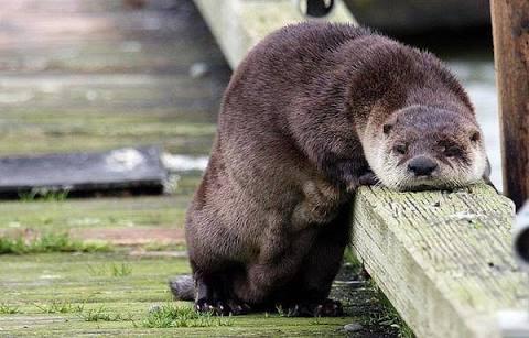 【何があった?】悲しげな表情の動物達【画像】