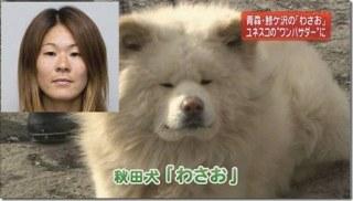 犬顔タイプの女性芸能人ランキング