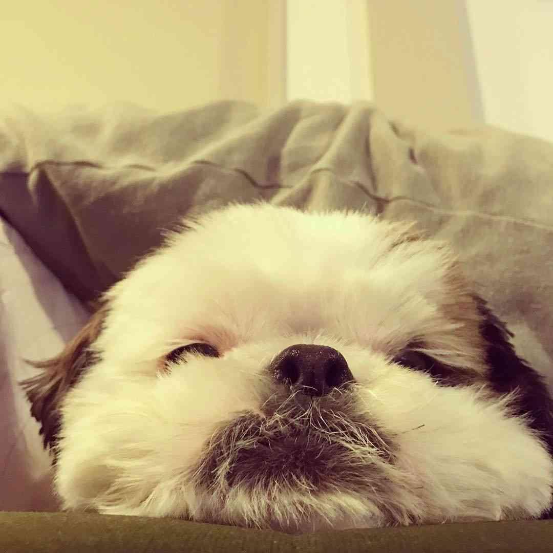 【癒し】寝る前にリラックス出来る画像を下さい