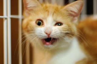 「キター!」も、これで見納めか…『世界陸上』織田裕二の
