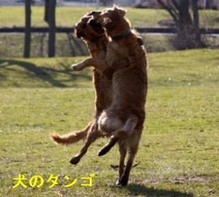 踊る!画像