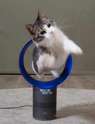 扇風機(サーキュレーターも含む)何台ありますか?