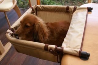 ペットをベンチに座らせることについて