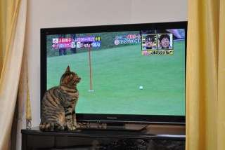 テレビ見ない人