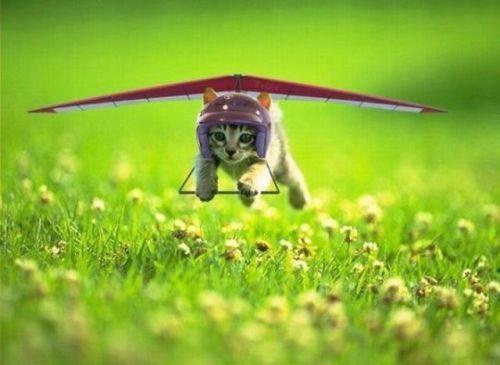 飛行機が怖い人・克服した人