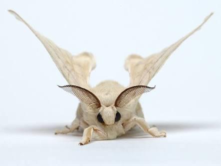 一番かわいい虫は何?