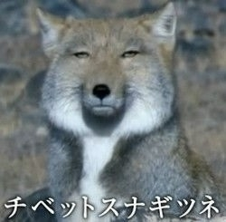 ガル子(ガルちゃん民)の恋人選手権
