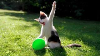 猫パンチトピ