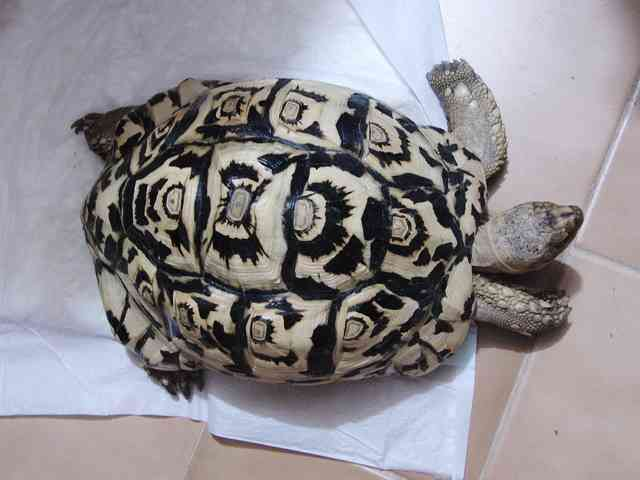 亀を愛でている方!