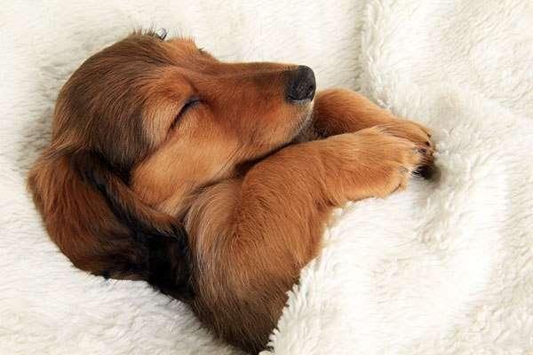 寝る事が何よりも楽しみな人