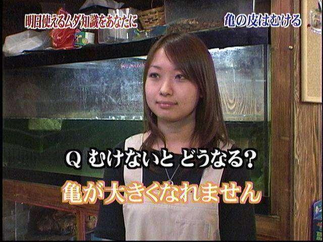 行方不明2週間、ゾウガメ発見者に懸賞金50万円 岡山