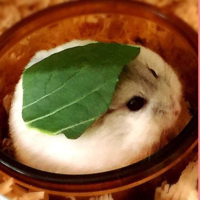 小松菜どうする?