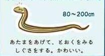 身近なヘビの見分け方を説明したイラストがかわいい「子どもに読ませたい」「小学校の図書館に掲示したい」などの声も