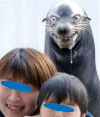 何か企んでそうな動物画像を貼るトピ