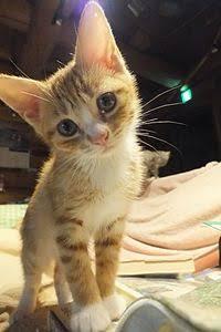 ひどい!猫に熱湯かけ、バーナーであぶって死なせた動画を投稿 動物虐待容疑で税理士逮捕 警視庁