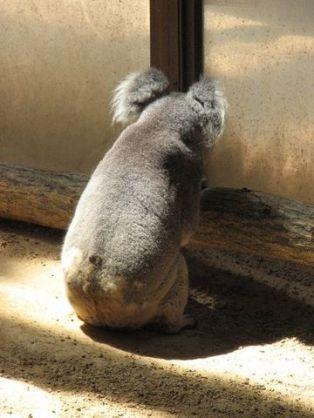 動物のお尻の画像を集めよう