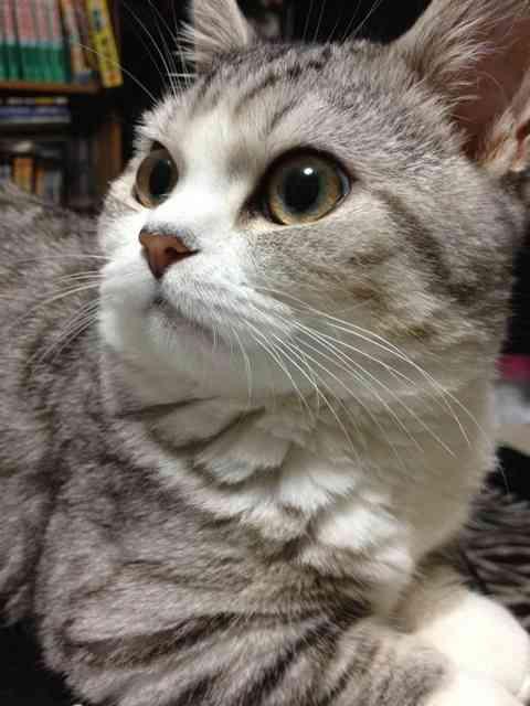 【ω】猫の【ω】が見たい【ω】