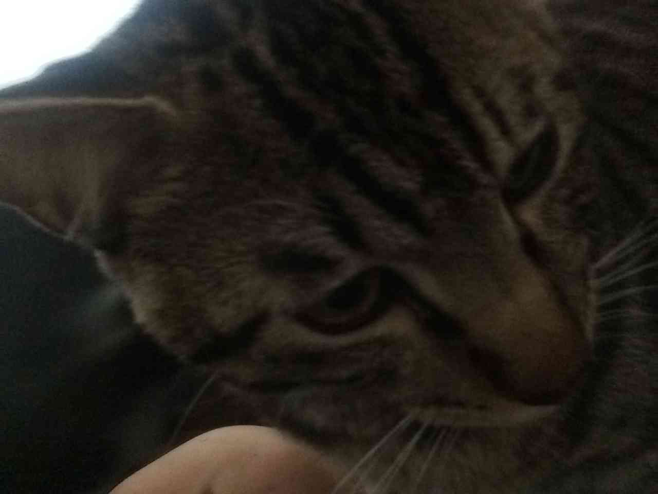 【猫】のセクシー写真集を作ろう!