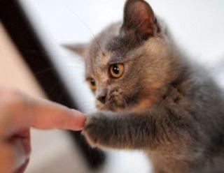 相手に指差しをして話す人