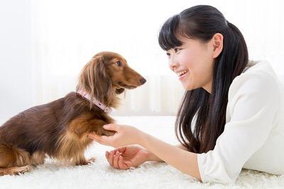 犬が喜ぶことをしたい!