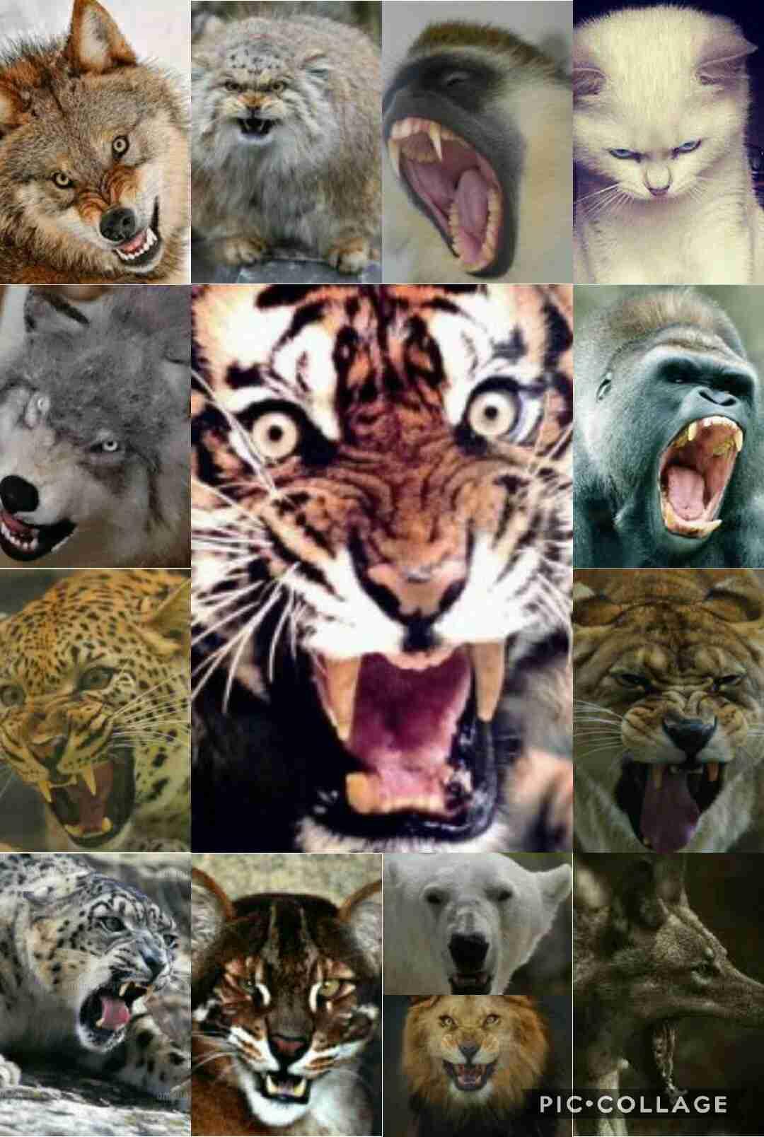 威嚇している動物の画像を貼るトピ