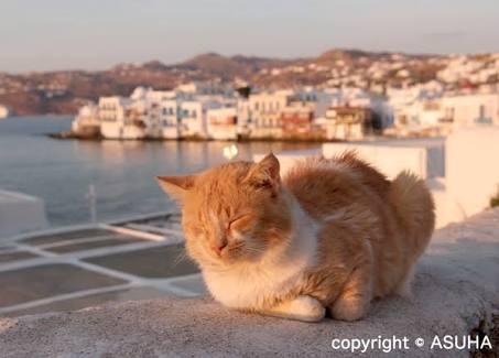 イェーイ♪海を満喫している犬・猫達!