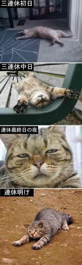 猫になりきって話すトピ
