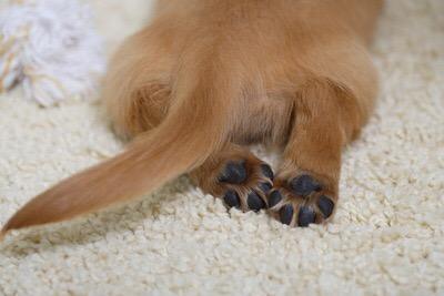 ペットを飼う飼育条件