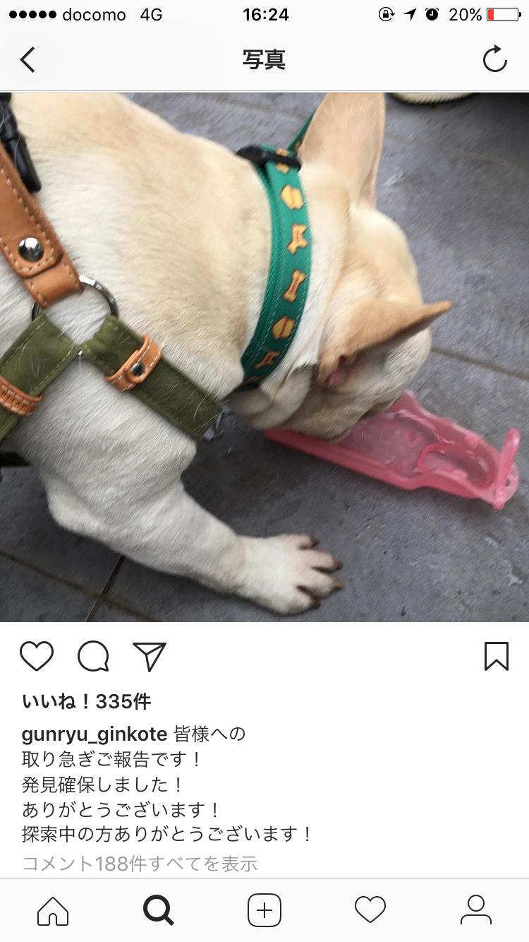 迷子犬の探し方