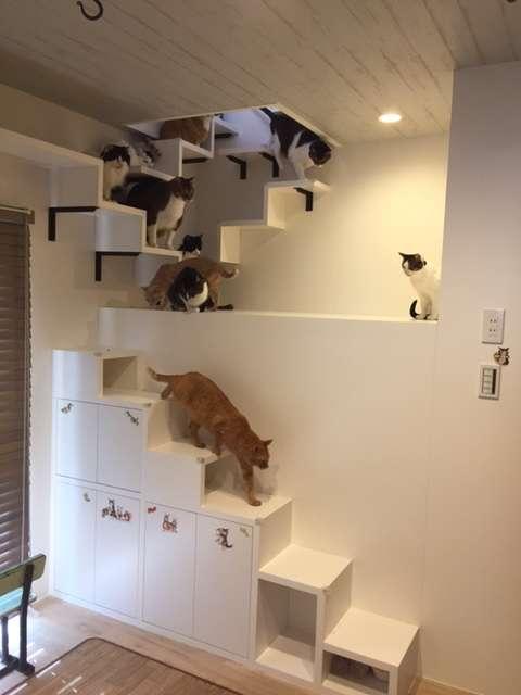猫飼いさんのマイホーム
