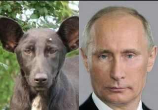 プーチン大統領の画像が集まるトピ
