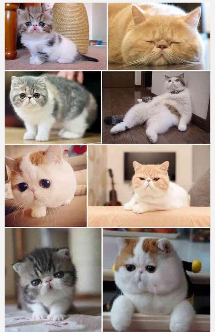 売れ残りの猫ちゃんが出会ったのは…… 漫画「おじさまと猫」に「電車で泣きそうになった」「涙が止まらない」の声