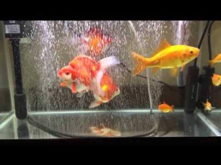 魚を飼ってる人!