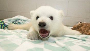 色んな白熊が見たい!
