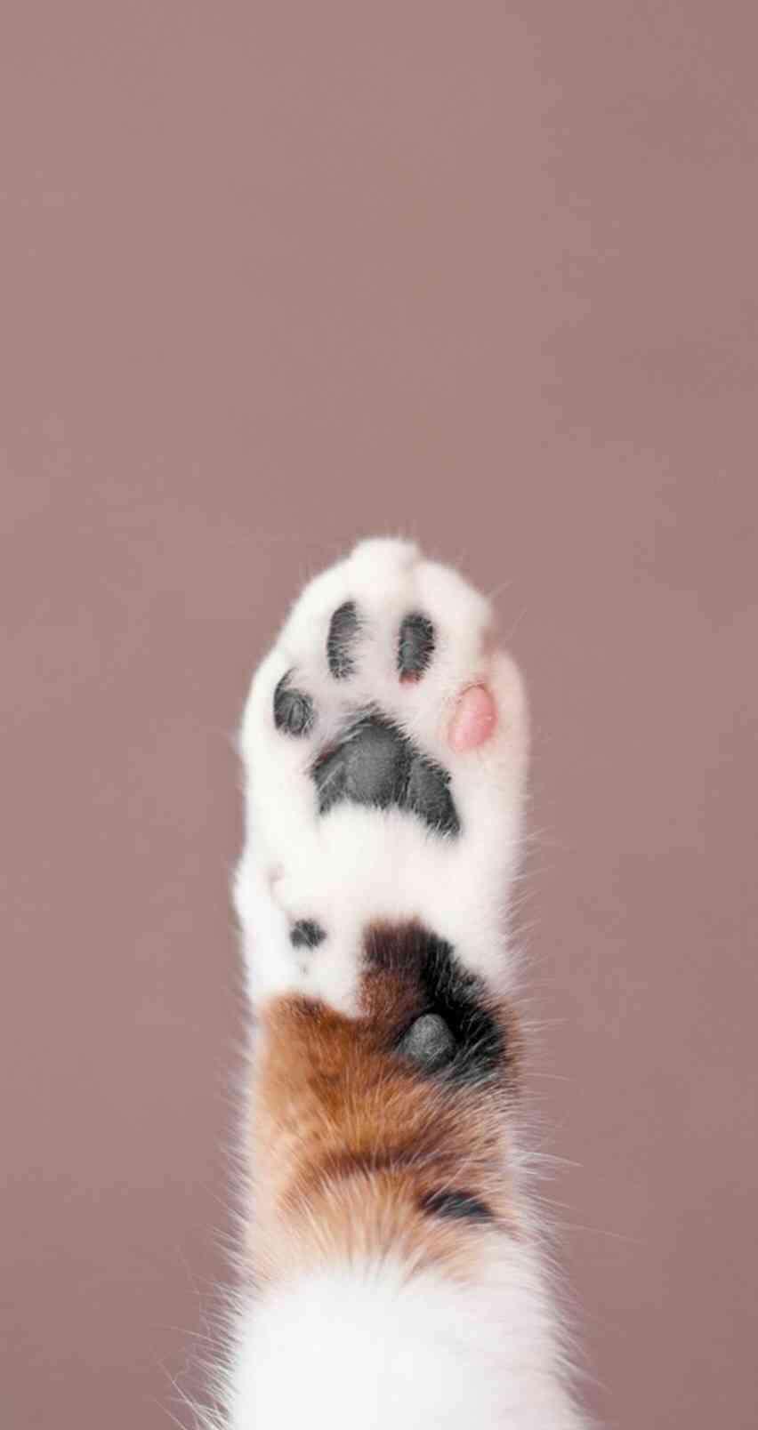 猫の「肉球」の画像が欲しい
