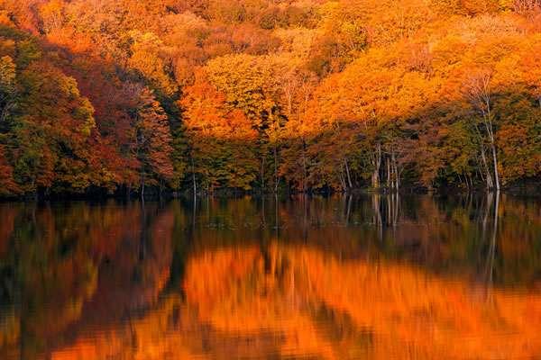 秋を待っている人、集合しましょ。