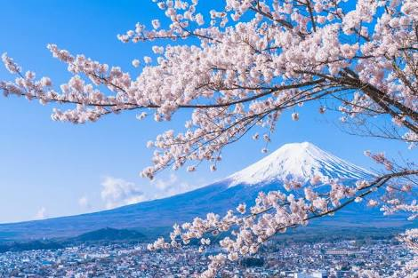 日本人で良かった!と思う瞬間。