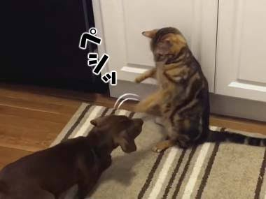 犬派?猫派?
