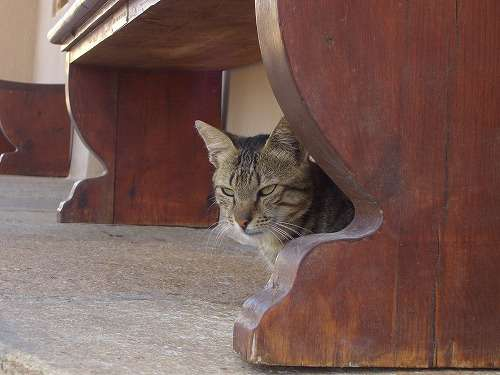 ガルちゃん猫カフェ18号店 開店しました♪ (初めての方も大歓迎!)