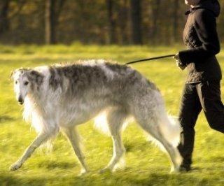 犬の散歩中の会話